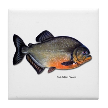 Red-Bellied Piranha Fish Tile Coaster