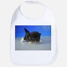 Finley - 126 Black Tuxedo Ragamuffin Kitten Baby B