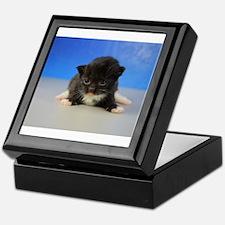 Gideon - 126 Black Tuxedo Ragamuffin Kitten Keepsa