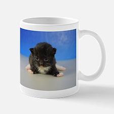 Gideon - 126 Black Tuxedo Ragamuffin Kitten Mugs