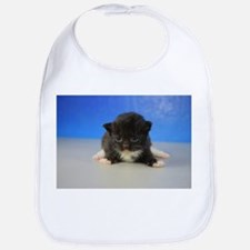 Gideon - 126 Black Tuxedo Ragamuffin Kitten Baby B