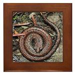 Slender Salamander Framed Tile