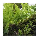 Ferns on Oak Tree Tile Coaster