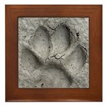 Gray Fox Track Framed Tile