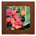 Madrone Berries Framed Tile