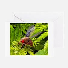 Fruit fly, SEM Greeting Cards