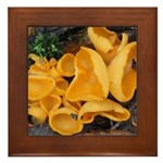Orange Peel Fungi Framed Tile
