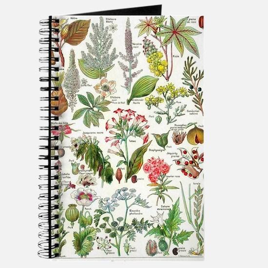 Botanical Illustrations - Larousse Plants Journal