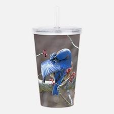 Bluebird Acrylic Double-wall Tumbler