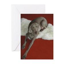 Beautiful AKC Champion Weimaraner photo Greeting C