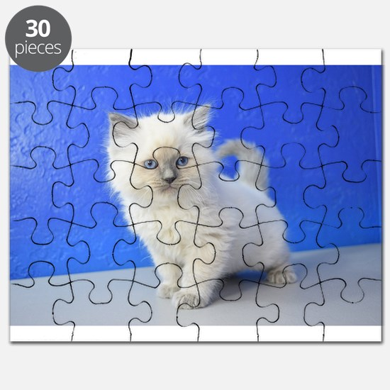 Kissy - Ragdoll Kitten Blue Point Puzzle