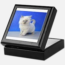Kissy - Ragdoll Kitten Blue Point Keepsake Box