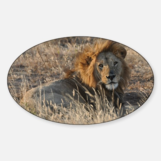 Male African Lion Decal