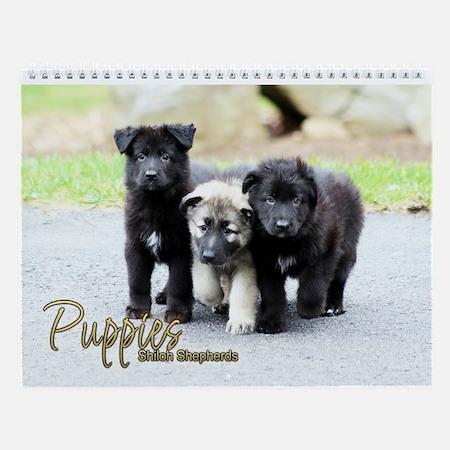 Shiloh Puppy