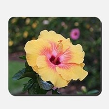 Pink yellow hibiscus flower Mousepad