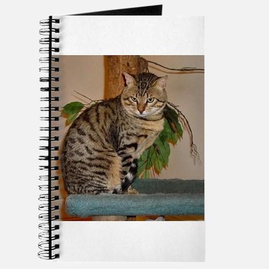 egyptian mau sitting 2 Journal