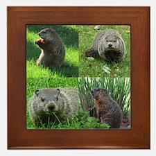 Groundhog medley Framed Tile
