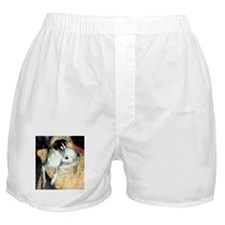 Cool Shayna Boxer Shorts