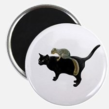 Squirrel on Cat Magnets