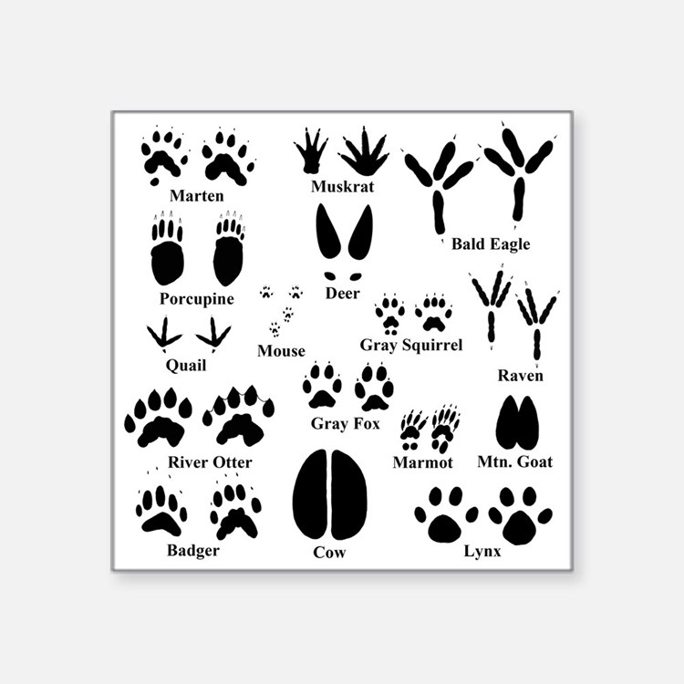 Animal Tracks Bumper Stickers Car Stickers Decals Amp More