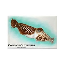 Common Cuttlefish Rectangle Magnet