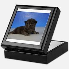 Cole - Ragamuffin Kitten Black Solid Keepsake Box