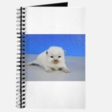 Jack - Ragdoll Kitten Seal Point Journal