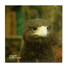 Redshouldered Hawk Tile Coaster