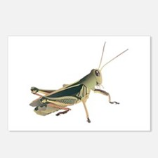 GRASSHOPPER Postcards (Package of 8)