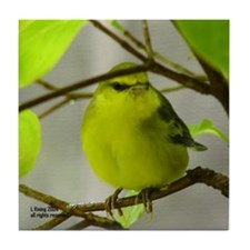 Yellow Warbler Tile Coaster