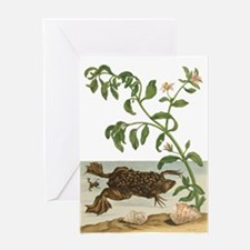 Toads Greeting Cards