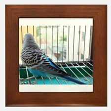 Blue budgerigar looking out of a cage Framed Tile
