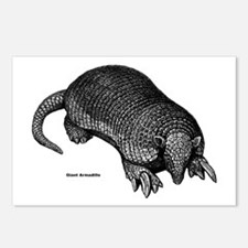 Giant Armadillo Postcards (Package of 8)