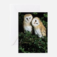 Barn owls Greeting Cards