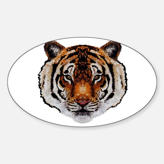 STARE Decal