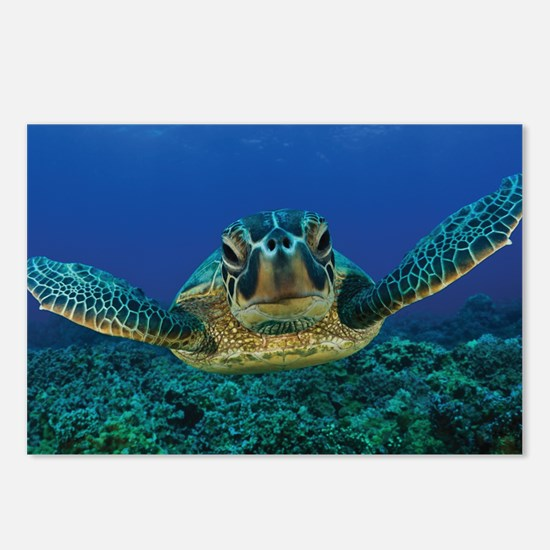 Turtle Swimming Postcards (Package of 8)