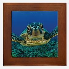 Turtle Swimming Framed Tile
