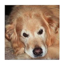 Cute Golden retriever puppy Tile Coaster