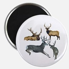 "Bull elk and buck deer 17 2.25"" Magnet (100 pack)"