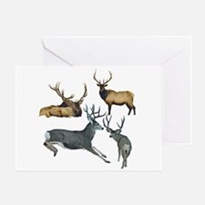 Bull elk and buck deer 17 Greeting Card
