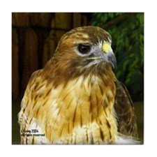Redtail Hawk Tile Coaster