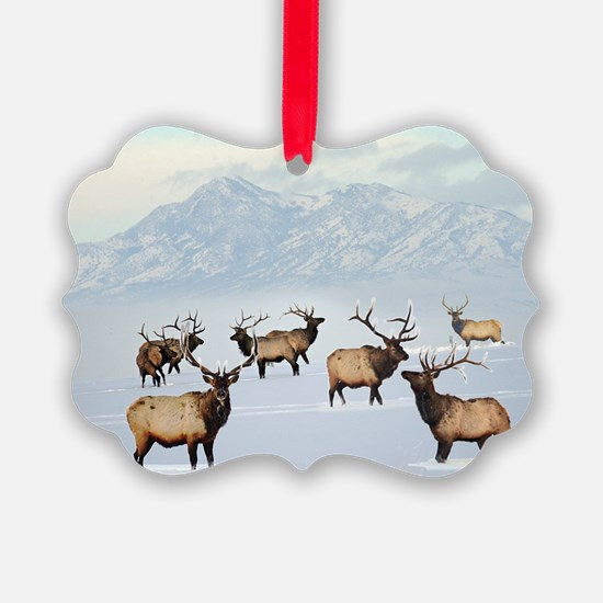 Cute Wildlife photography Ornament