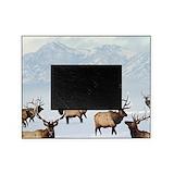 Elk Picture Frames