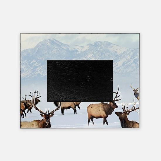 Unique Bull Picture Frame