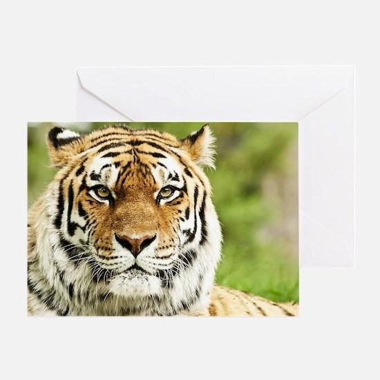 Cute Lsu tigers Greeting Card