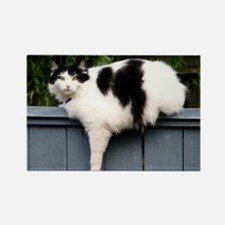 Big Fat Cat On Fence Magnets