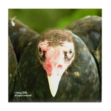 Turkey VultureTile Coaster