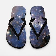 Creationism Flip Flops