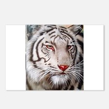 Tiger-white Postcards (Package of 8)