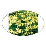 Coreopsis Moonbeam Oval Sticker